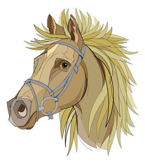 Fantasy drawing of head of cute horse with a flowing mane on white background. Hand-drawn vector image.
