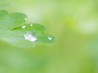 Green leaf with water drop - beautiful background