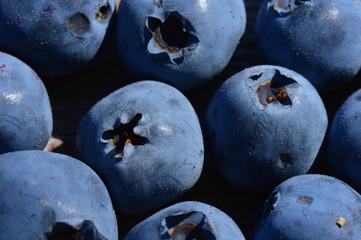 Large ripe blueberry berries harvest of summer swamp fresh fragrant fruit