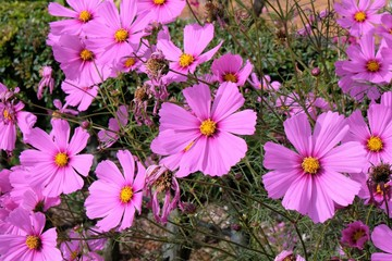 Fond de hotte en verre imprimé Univers fiore rosa natura giardino petalo flora fiorire primavera viola campo