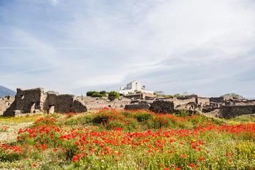 Mohnblumenfeld vor Pompeji