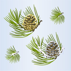 Set of Christmas and New Year decoration golden pine cone and snow pine cone fir tree branches vintage vector illustration editable hand draw