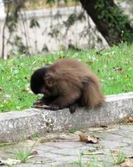 monkey nail a primate
