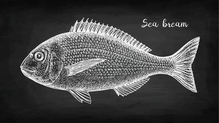 Chalk sketch of gilt-head sea bream fish.