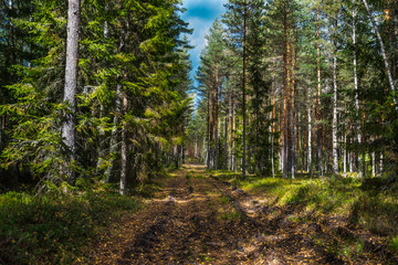 Autumn forest nature. Bright morning in forest with sun rays through branches of trees. Scenery of nature with sunlight.