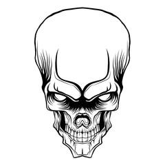 skull head vector illustration isolated
