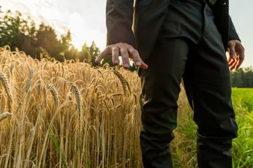 Businessman standing in summer wheat field