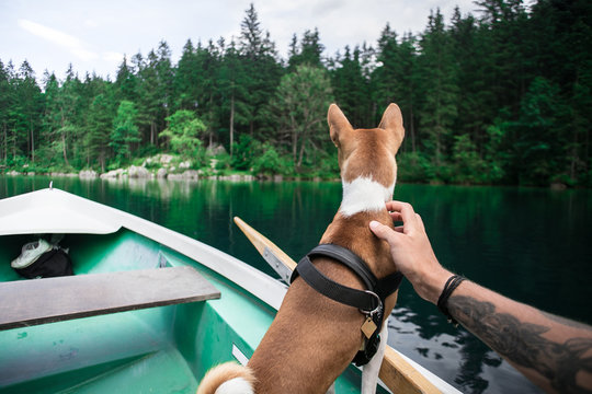 POV of man, tourist, traveller or hiker during weekend adventure out of town with best friend puppy, brown basenji dog, pets and cuddles him, while enjoys views on green lush forest and lake from boat