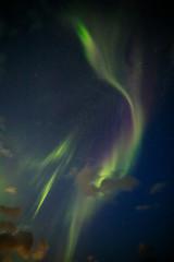 Aurora Borealis dancing in the arctic sky