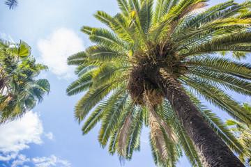 ヤシの木と空 レイアール広場