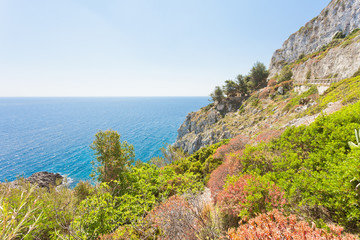 Apulia, Leuca, Grotto of Ciolo - Vegetation at the coastline of Grotto Ciolo
