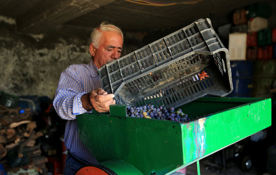 Gorgis, an Iraqi Christian wine maker, pours grapes into a squeezing machine in Dhiha village near Duhok