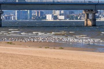 Beautiful landscape with many gulls and a bridge