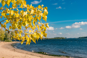 Branch with yellow autumn leaves and deserted beach in the background
