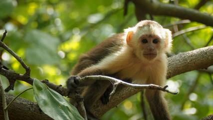 monkey sitting on a tropical tree
