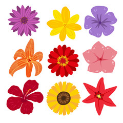 flower vector collection design