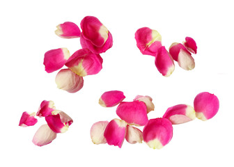 Set of pink rose petals