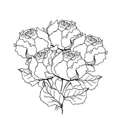 Peony rose bouquet. Liner  illustration on white
