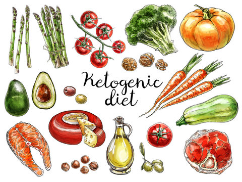 Food sketches. Hand drawn different vegetables, meat, cheese and nuts for the ketogenic diet diet or low carb diet. Digital watercolor.