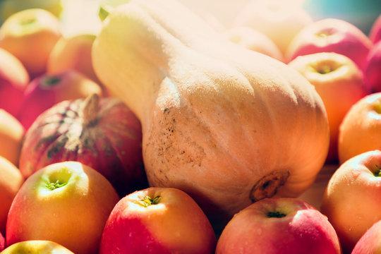 closeup of pumpkins and apples