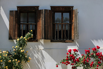windows with wooden shutters and ivy roses