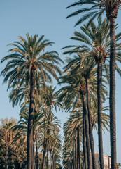 palm avenue in palma de mallorca