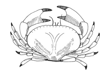 Hand drawn crab. Vector illustration in sketch style