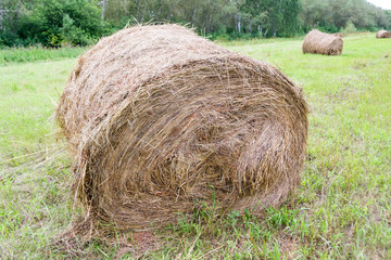 A large haystack of dry hay at the time of harvesting and rolled up on a roll lies on the green grass and nearby lie other haystacks with forest in the background