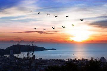 Wall Mural - Birds flying in v shaped..Silhouette flock of birds flying over patong coastal city  with twilight sky  at sunset.
