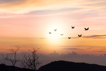 Wall Mural - Birds flying..Silhouette flock of birds flying over mountain coastline with twilight horizon sea sky at sunset.