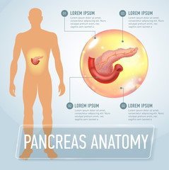 Vector pancreas infographics banner illustration. Medical Poster