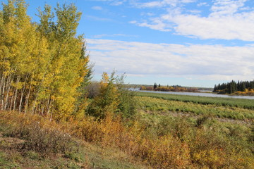 Changing Colours By The Lake, Elk Island National Park, Alberta