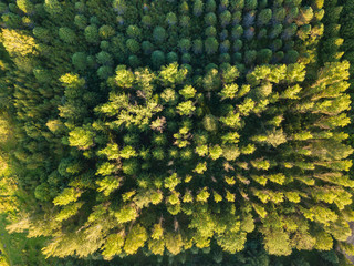 Aerial top view of the forest, texture of forest.