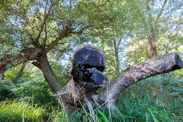 Il mostro. Parco fluviale sorgenti del Fiume Lavino.
