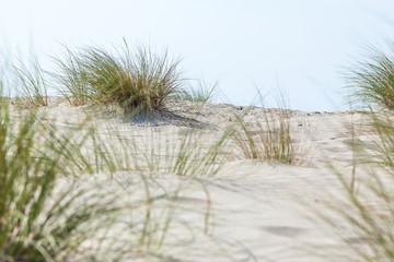 Dünengras an der Nordsee