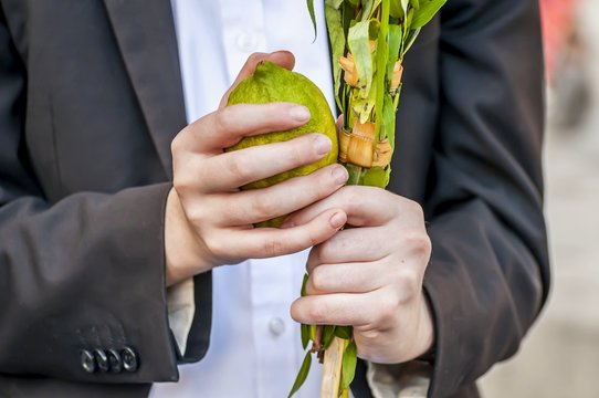 Hands of a Caucasian man holding a traditional set of four species for the Jewish Sukkot holiday: Etrog (green citrus fruit), lulav, hadas and arava. Saying the Sukkot blessing.
