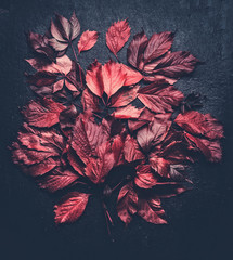 Dark rustic autumn background with various red fall leaves, top view, flat lay