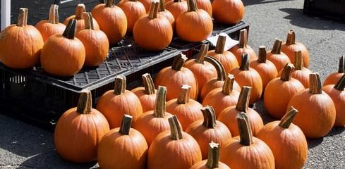Pumpkins on display