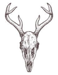 Sketch Of Deer Skull. Boho Hand Drawn Illustration
