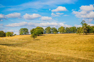 Paysage de Bourgogne en été