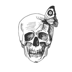 skull with a sitting on it butterfly