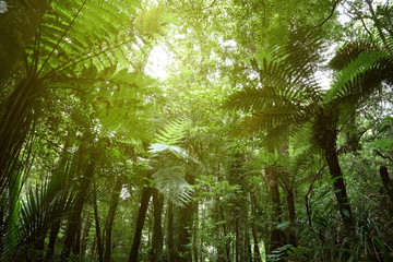 Jungle fern trees