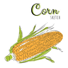 Hand drawn composition with corn.
