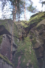 Cliff in forest