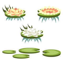 Set of cartoon vector water lilies of different type
