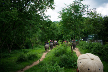 riding on elephants in jungle