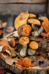 Autumnal wild forest edible mushrooms (boletus) in basket on rustic wooden background