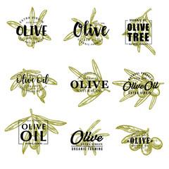 Olive oil and farm olives vector sketch lettering