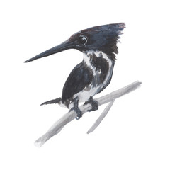 Kingfisher Bird watercolor isolated .Kingfisher Bird on white background. Watercolor hand painted  illustration of Kingfisher Bird.