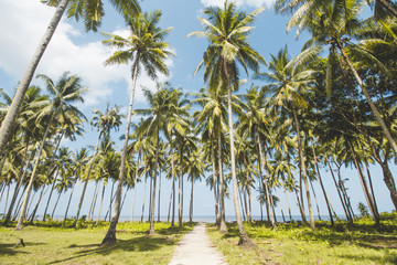Palm or Coconut Tree, Cloudy Blue Sky and Tropical Mud Beach
